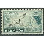 Bermuda 138 **