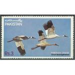 Pakistan 593 **